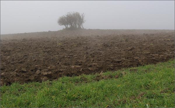 Výchozy devonského vápence v polích nad Jesencem