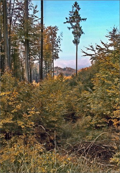 V lesích nad Nectavou