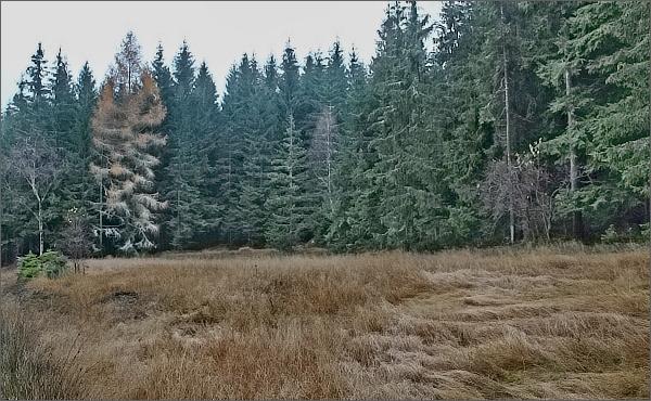 Lesy nad Karlovem