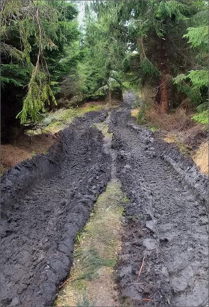 Zničená lesní cesta