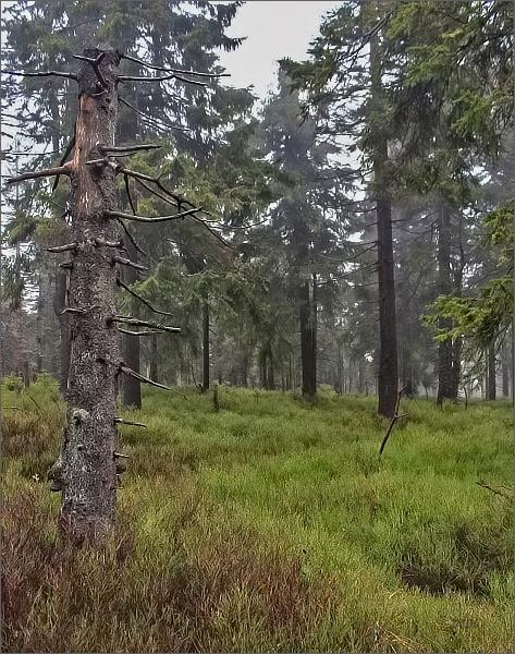 Les pod Jelení studánkou