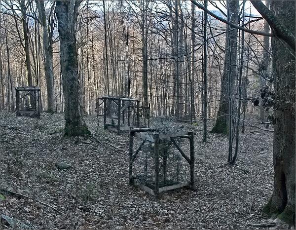 Přírodní rezervace Jelení bučina
