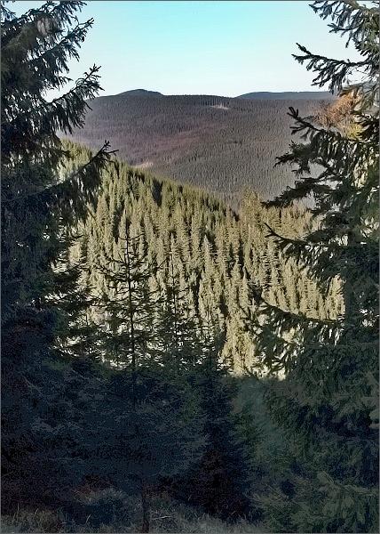 Dřevařská cesta. Pohled do údolí Videlské silnice