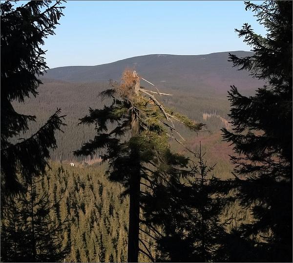 Pohled z Dřevařské cesty. Tak tady jsem bezradný...