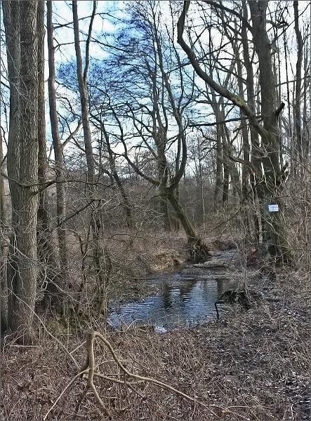 Přírodní památka Nyklovický potok