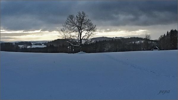Bývalá obec Morgenland s památným jasanem