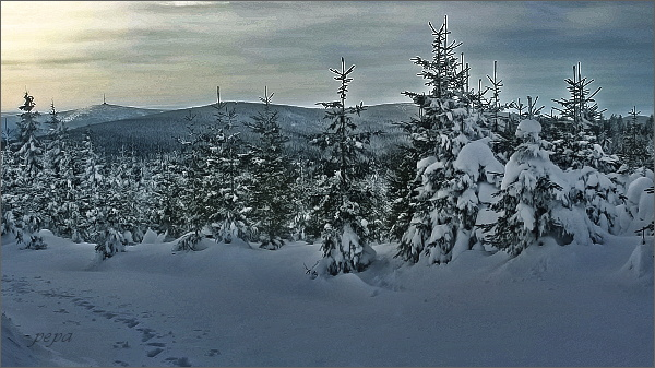 Cestou na Medvědí vrch. Pohled k Pradědu