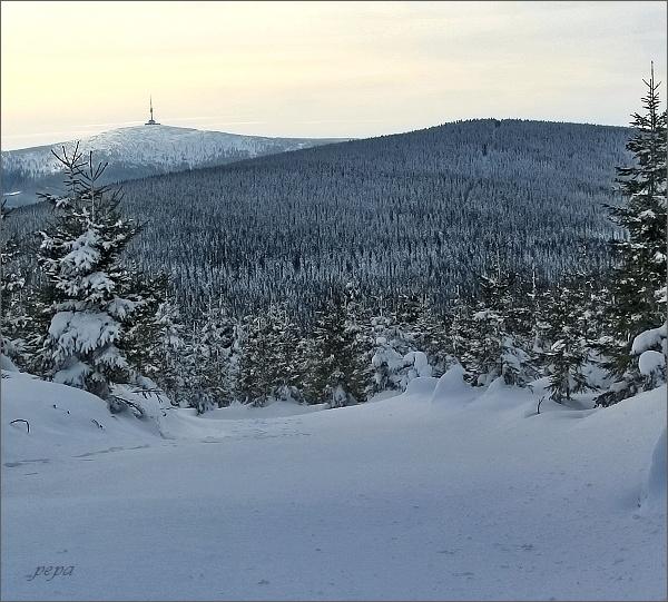 Pohled k Pradědu ( v popředí Černý vrch, 1202 m n. m. )