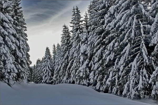 Kouzlo zimního lesa