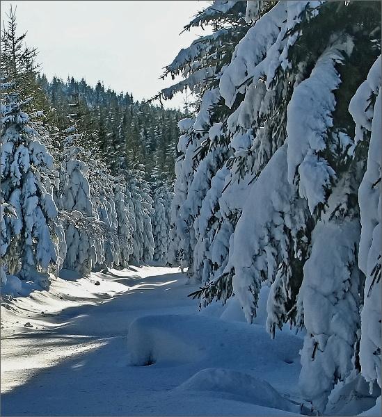 Pohádkovým lesem na Medvědí vrch