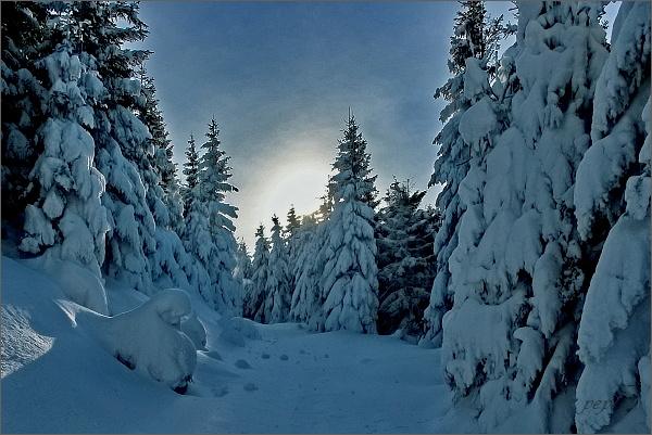 Pohádkový les pod vrcholem Medvědího vrchu
