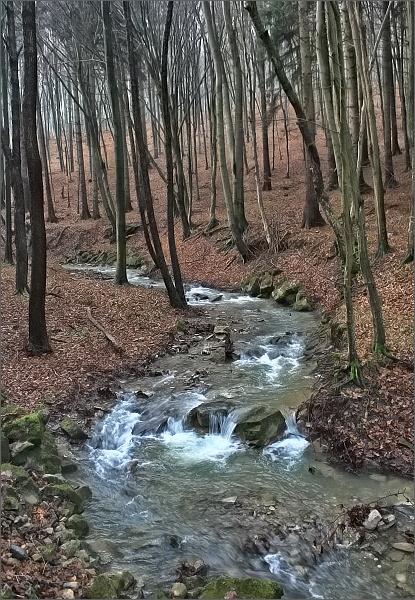 Silvestrovský bělokarpatský les