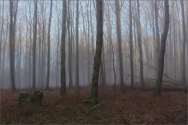 Mlha v bělokarpatském lese