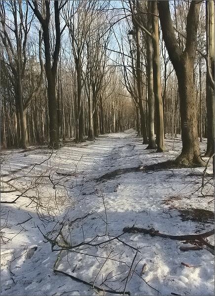 Po zmrzlém sněhu se jde o mnoho lépe