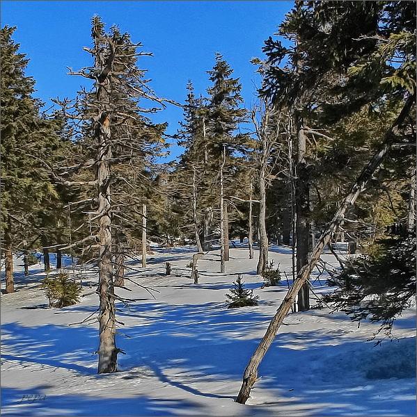 Les v NPR Šerák - Keprník