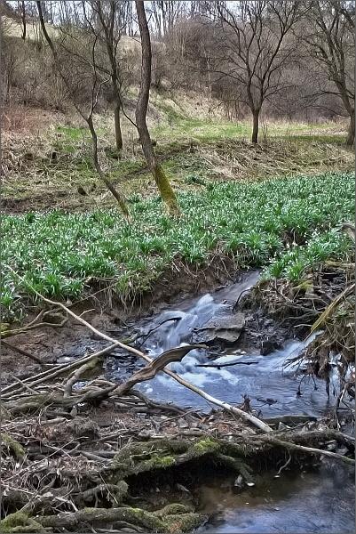 Bledule jarní v PP Údolí Chlébského potoka