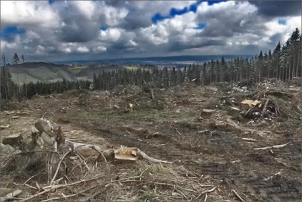 Zdevastovaný les na Zněcku
