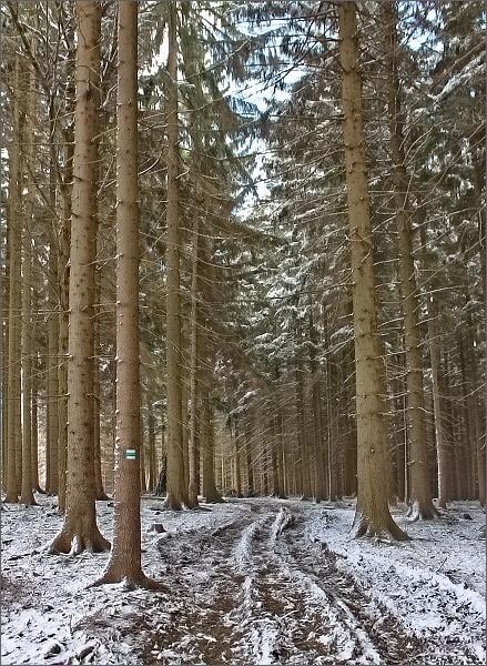 Zněcko. Ve stinných místech se stále drží sníh