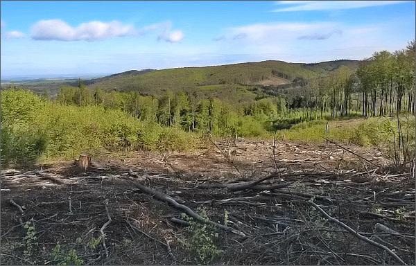 Nad Cimburkem. I lesy v Chřibech jsou poznamenané těžbou