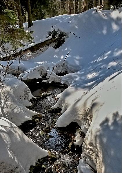 Lesní potůček, jeden z přítoků Bílé Opavy