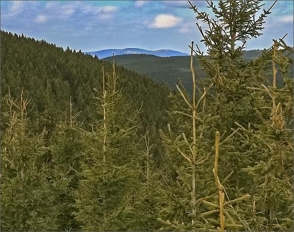 Jesenické lesy z Karliných kamenů