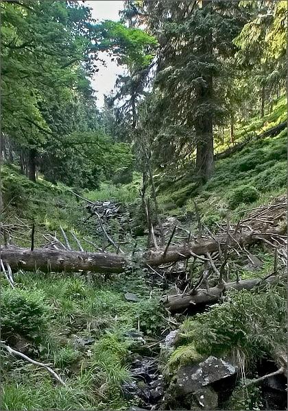 Cesta klesá nejprve divokým korytem bezejmenného potoka