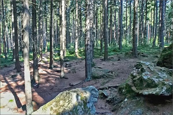 Les u Rolandova kamene