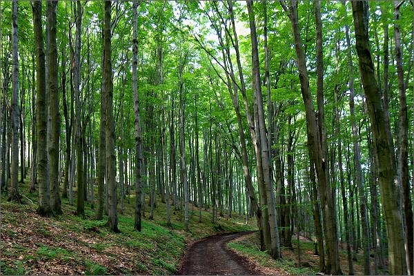 Bukové lesy na Vršavě