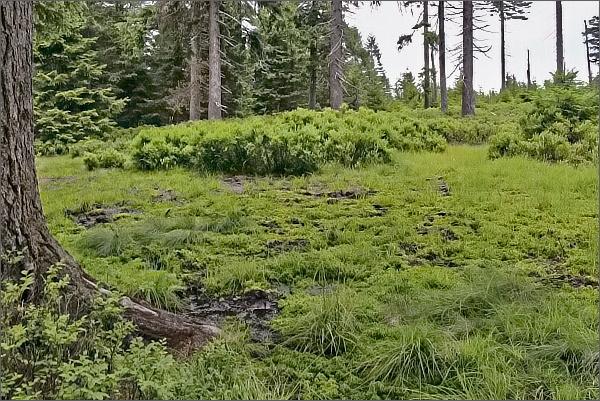 Přírodní památka Rašeliniště na Smrku