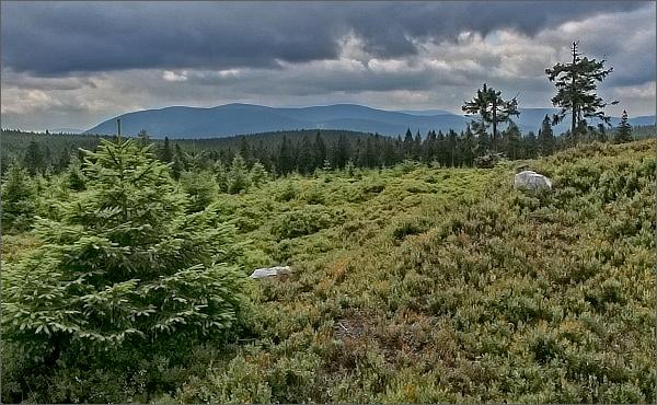 Pohled z Brousku ke Keprnické hornatině