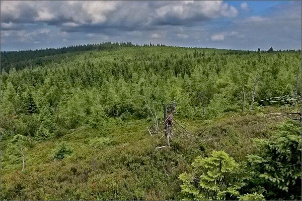 Hřeben Rychlebských hor z Brousku