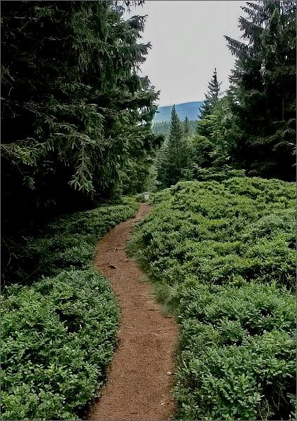 Cesta ke Klínovému vrchu, pohled zpět ke Smrku