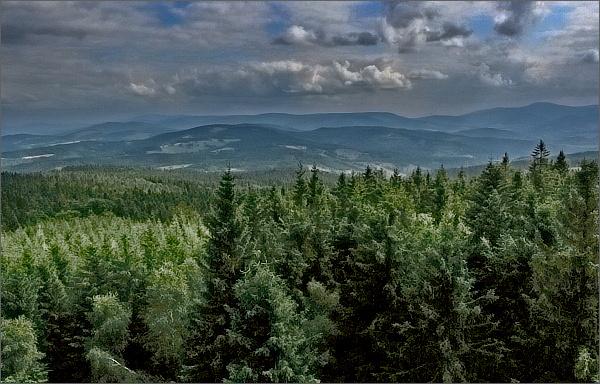 Borůvková hora, pohled k Hrubému Jeseníku