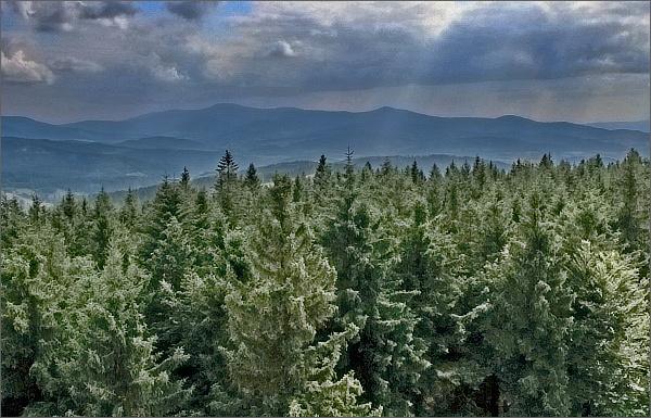 Borůvková hora, pohled ke Králickému Sněžníku