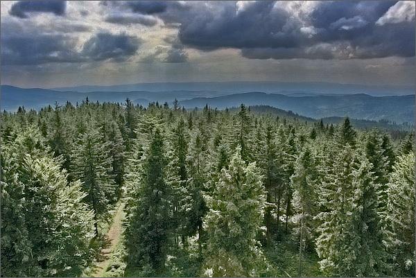 Borůvková hora, pohled k Orlickým horám