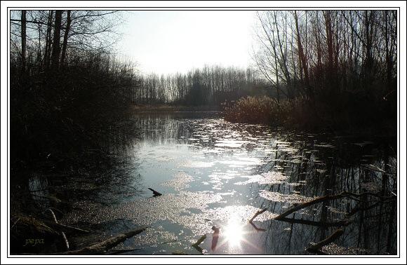 Jaro v Dunajských luzích